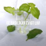 Tips – få din basilika att leva längre